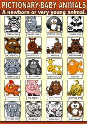 English Worksheet: Baby Animals Pictionary