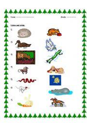 English Worksheet: Animal Actions (Listening)