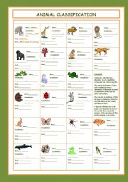 English Worksheets: Animal Classification