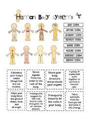 English Worksheet: Human Body Systems