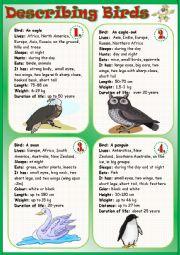 English Worksheet: Describing Birds