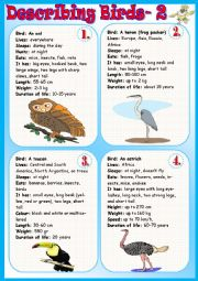 English Worksheet: Describing Birds 2