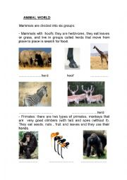 English Worksheet: Types of mammals