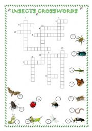 English Worksheet: INSECTS CROSSWORDS