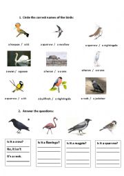 English Worksheet: Recognizing the birds