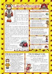 English Worksheet: Ladybugs (+key)