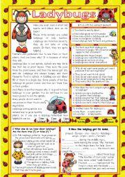 English Worksheet: Ladybugs (+key)