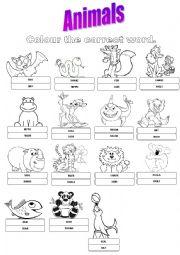English Worksheet: ANIMALS!!!