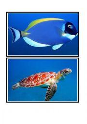 ocean animals flashcards
