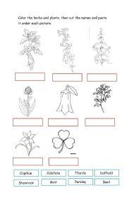 Worksheets Plant Adaptations Worksheet english worksheets plants worksheet plants