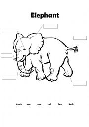 English worksheets: Elephant - body parts