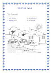 English Worksheet: The Water  Cycle