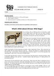 English Worksheet: Comprehension - African Wild dog