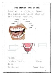 Our Mouth