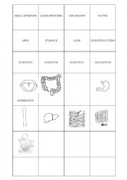 English Worksheet: digestion and respiration system cards