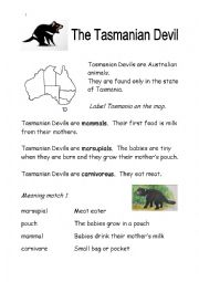 English Worksheet: Tasmanian Devil