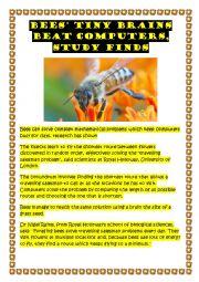 English Worksheet: Bees� brains