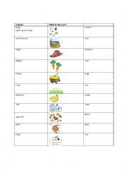 English Worksheet: What do animals eat