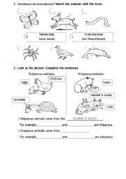 English Worksheet: Vertebrates or invertebrates