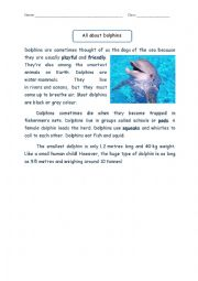 English Worksheet: Reading Comprehension: All About Dolphin