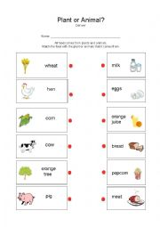english worksheets plant or animal. Black Bedroom Furniture Sets. Home Design Ideas