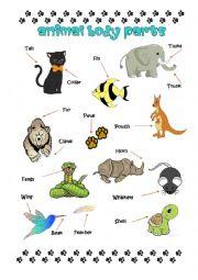 English Worksheet: Animal Body Parts Pictionaru