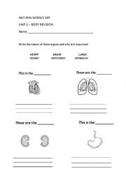 English Worksheet: Organs