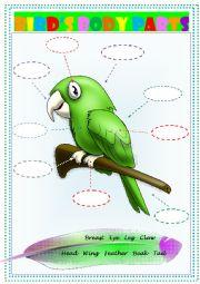 English Worksheet: Bird�s body parts