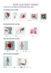English Worksheet: THE BODY: internal organs