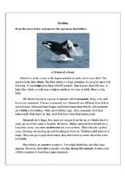 English Worksheet: A Whale