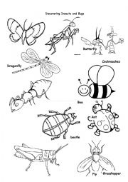 English Worksheet: Insects and Bugs