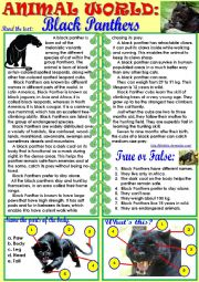 english worksheets animal world black panthers. Black Bedroom Furniture Sets. Home Design Ideas