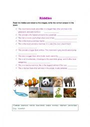 English Worksheet: Riddles about animals