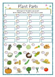 English Worksheet: Plant Parts _ What do we eat?
