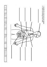 English Worksheet: Internal Body Organs