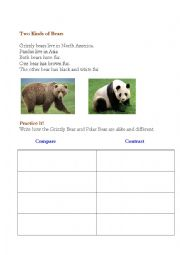 English Worksheet: Compare and Contrast bear