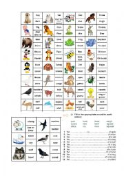 English Worksheet: Animal & Bird Sounds