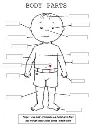 English Worksheet: Body parts color, cut and paste