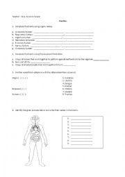 English Worksheet: Human Body Organs