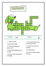 English Worksheet: a body crossword