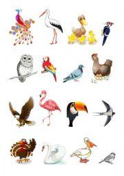 Birds and their names - ESL worksheet by kalpazanka5