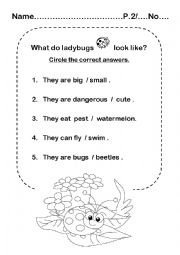 English Worksheet: Ladybug