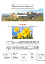 English Worksheet: The national flower of Wales
