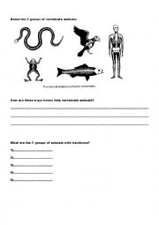 English Worksheet: Animal Classification - Vertebrates