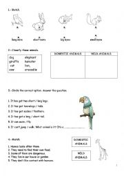 English Worksheet: Domestic and wild animals