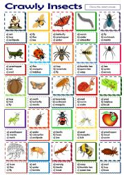 English Worksheet: Crawly Insects