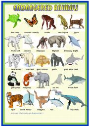 English Worksheet: Endangered animals: pictionary