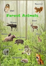 English Worksheet: Forest Animals