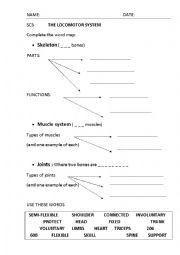 English Worksheet: The locomotor system