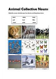 Animal Collective Nouns